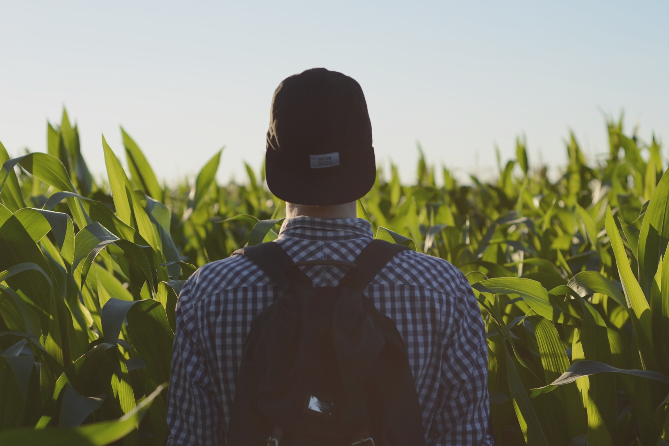 boss-fight-free-high-quality-stock-images-photos-photography-man-hat-corn-fields